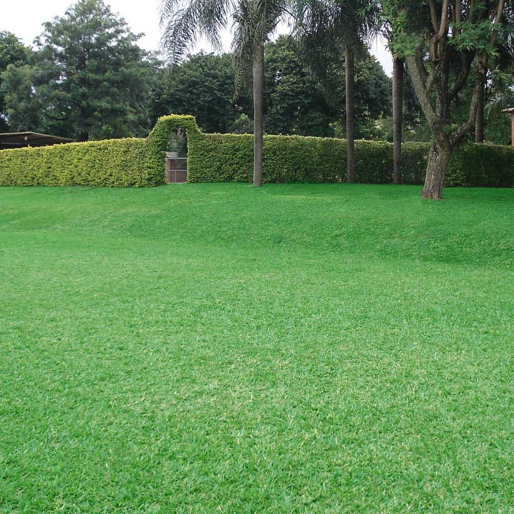 Sementes de Grama Bermuda Grass 3g - TSV Sementes Linha Jardim