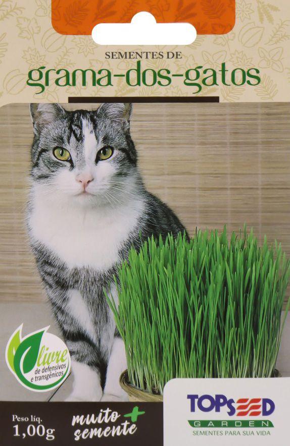 Sementes de Grama dos Gatos 1g - Topseed Linha Tradicional