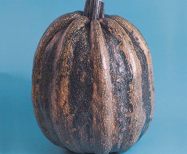 Sementes de Mogango Topseed Linha Tradicional Hortaliças 2,50g