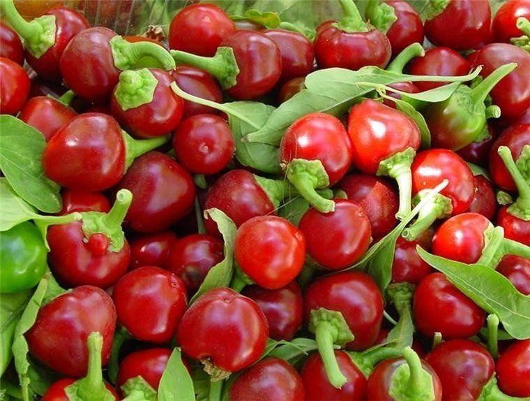 Sementes de Pimenta Bode Vermelha 400mg - Topseed Linha Tradicional Hortaliças