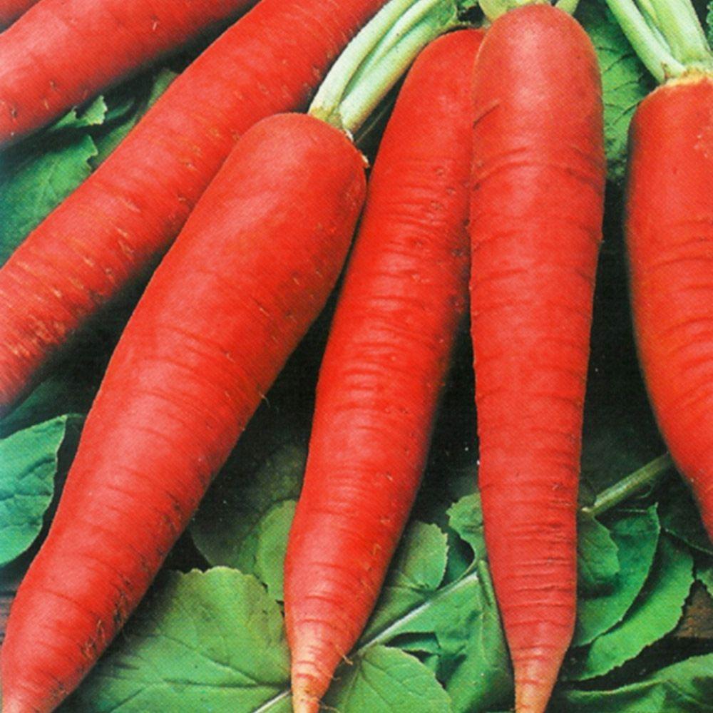 Sementes de Rabanete Comprido Vermelho 1g - TSV Sementes Linha Quintal