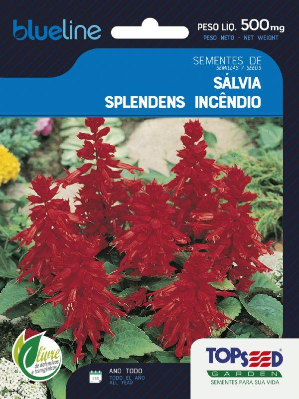 Sementes de Sálvia Splendens Incêndio 500mg - Topseed Blue Line