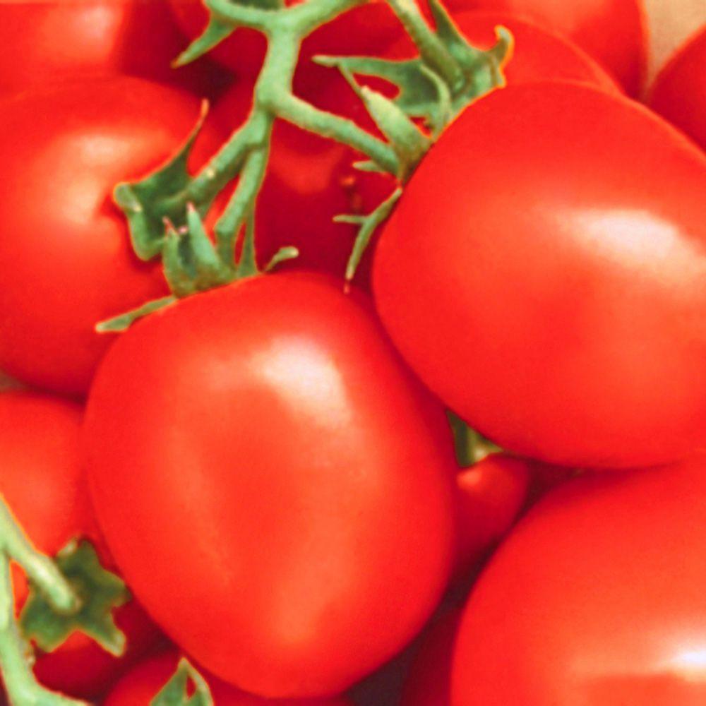 Sementes de Tomate Santa Cruz Kada 400mg - TSV Sementes Linha Quintal