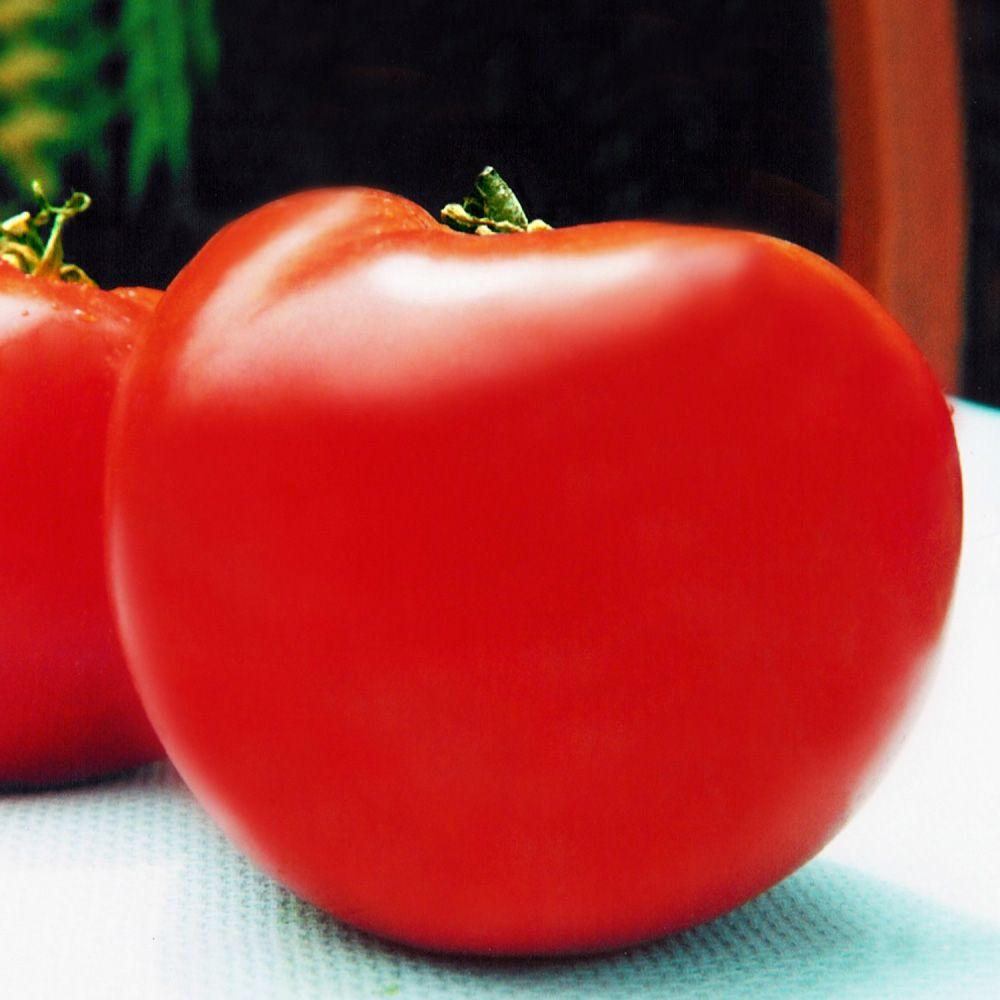 Sementes de Tomate Tom 01 (Gaúcho Gigante) 400mg - TSV Sementes Linha Quintal