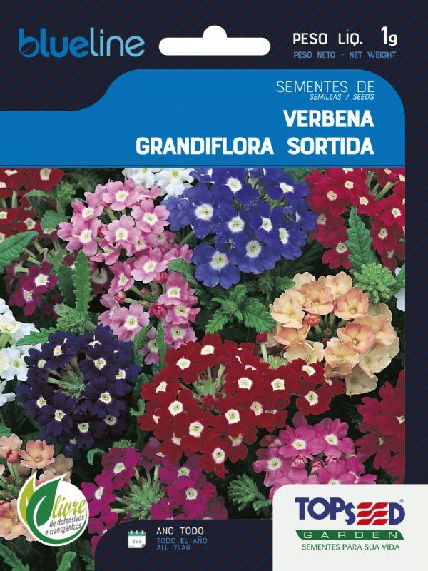 Sementes de Verbena Grandiflora Sortida 1g - Topseed Blue Line