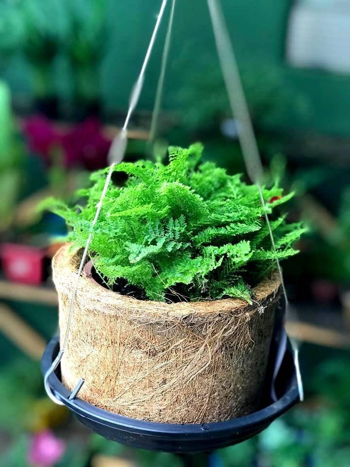 Suporte para Vaso de Planta em Aço Revestido com 3 Ganchos 40cm