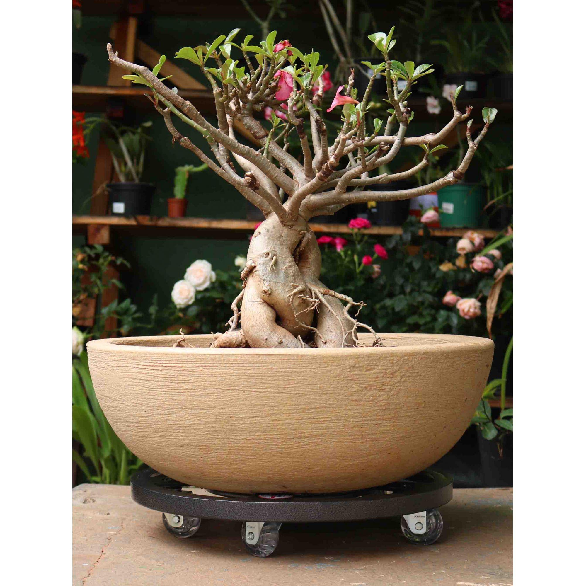 Suporte para Vaso em Alumínio Fundido com Rodízio Redondo 60cm Preto