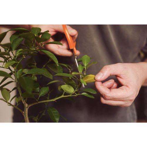 Tesoura para Colheita e Raleio Frutas Tramontina