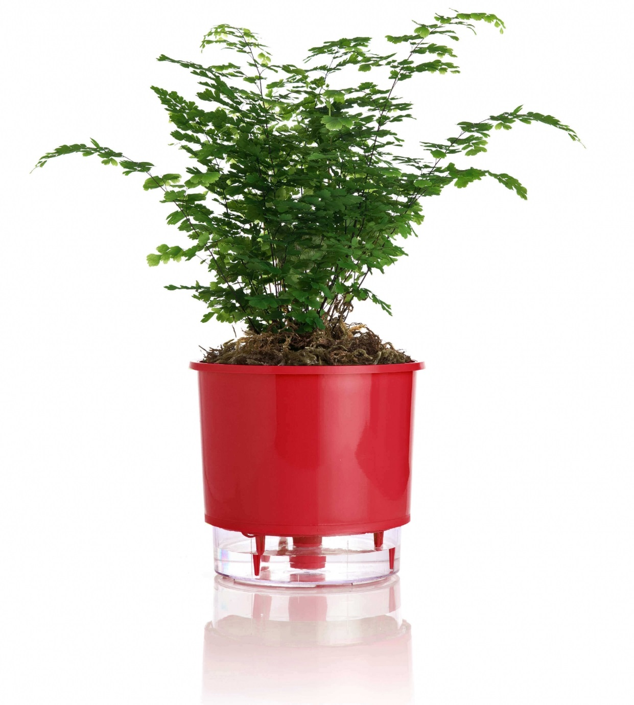 Vaso auto irrigável Raiz MÉDIO N03 16 cm X 14 cm Vermelho