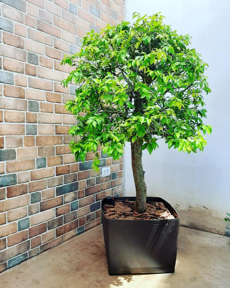 Vaso Autoirrigável Acqua Planta Quadrado Marrom 35cm x 49cm