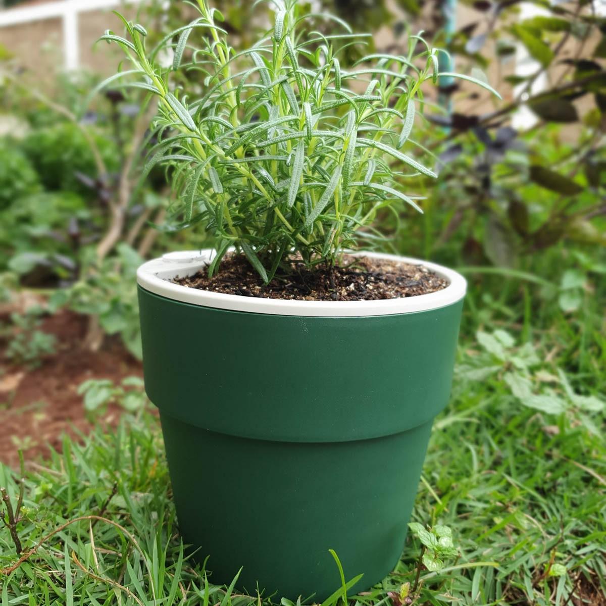 Vaso Autoirrigável Grande Verde Botânico Linha Plantar < Ou >