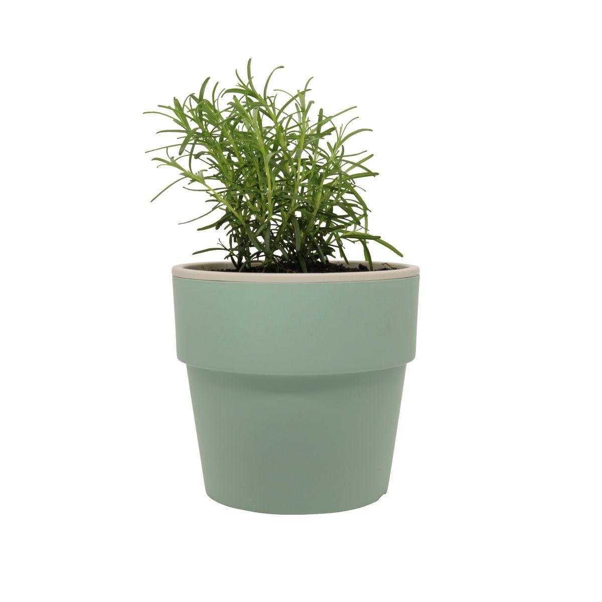 Vaso Autoirrigável Grande Verde Menta Linha Plantar < Ou >