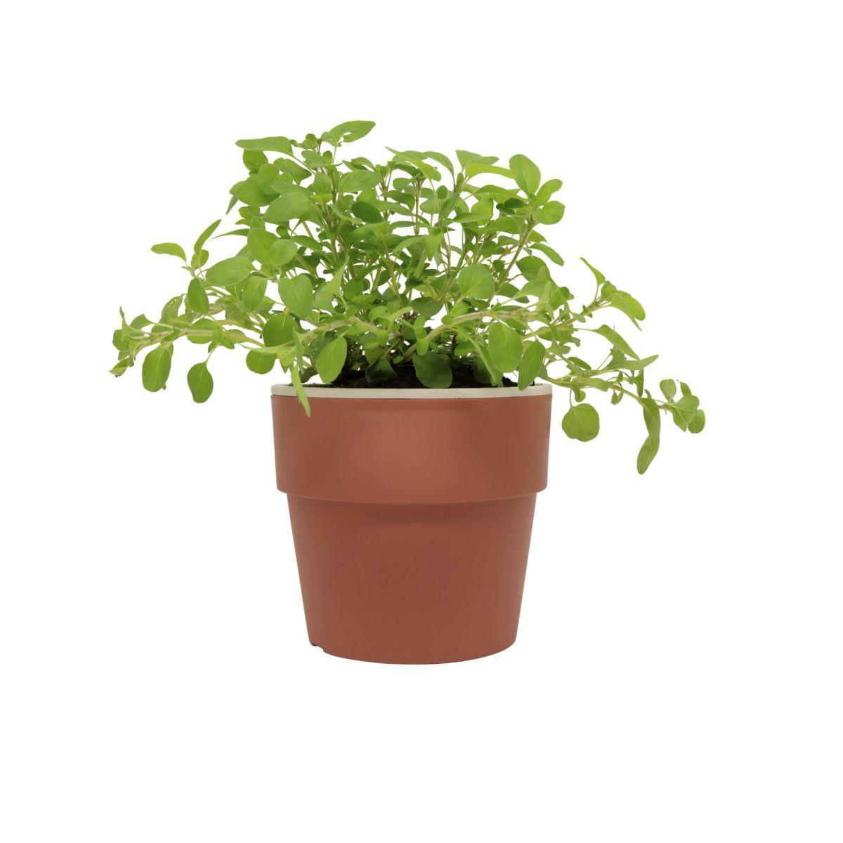 Vaso Autoirrigável Médio Terracota Linha Plantar < Ou >