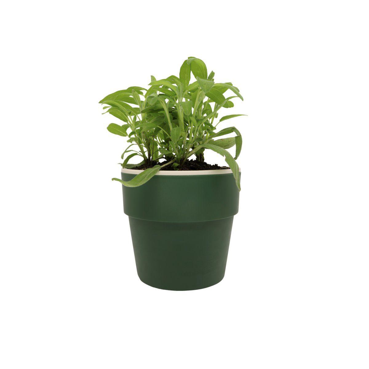 Vaso Autoirrigável Médio Verde Botânico Linha Plantar < Ou >