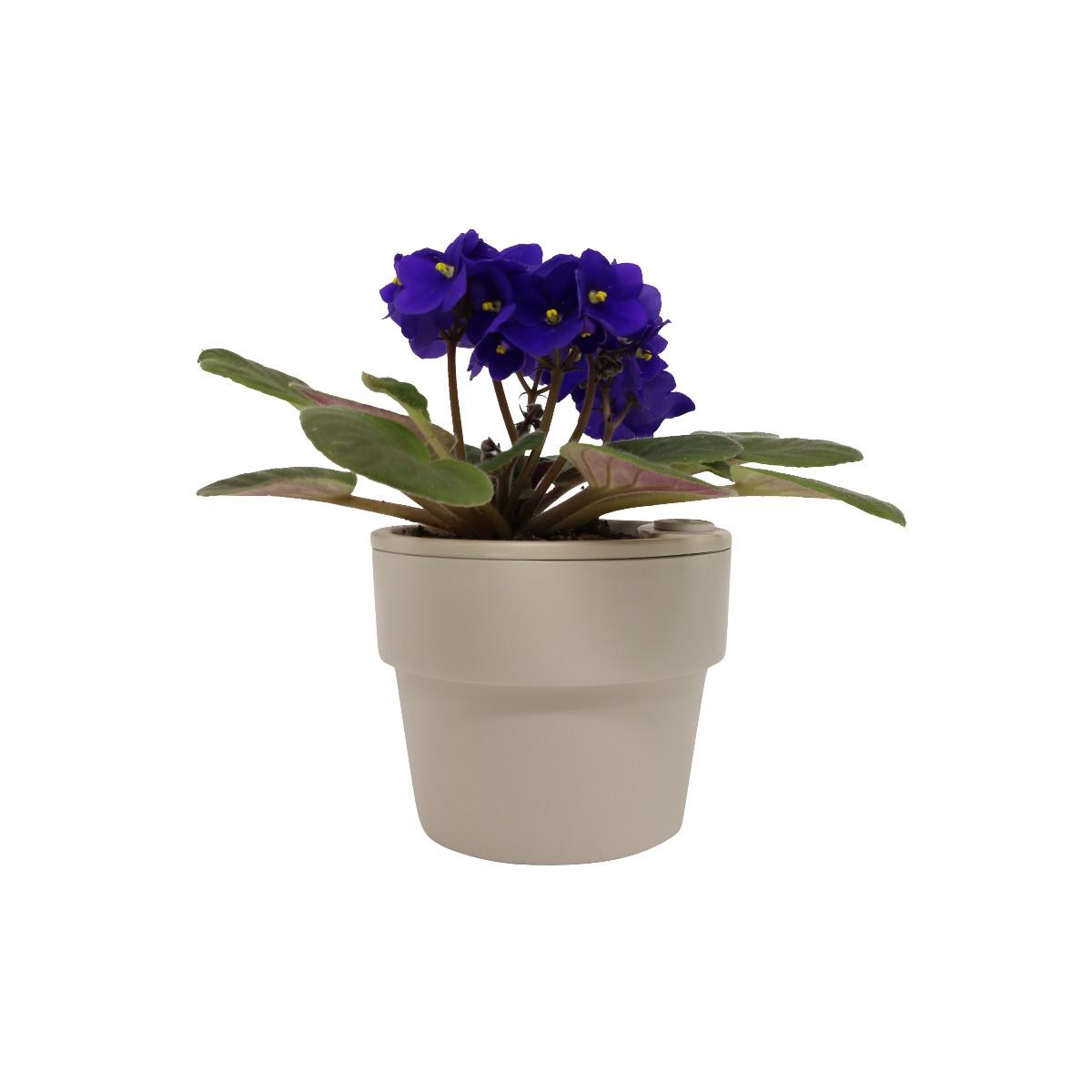 Vaso Autoirrigável Pequeno Bege Linha Plantar < Ou >