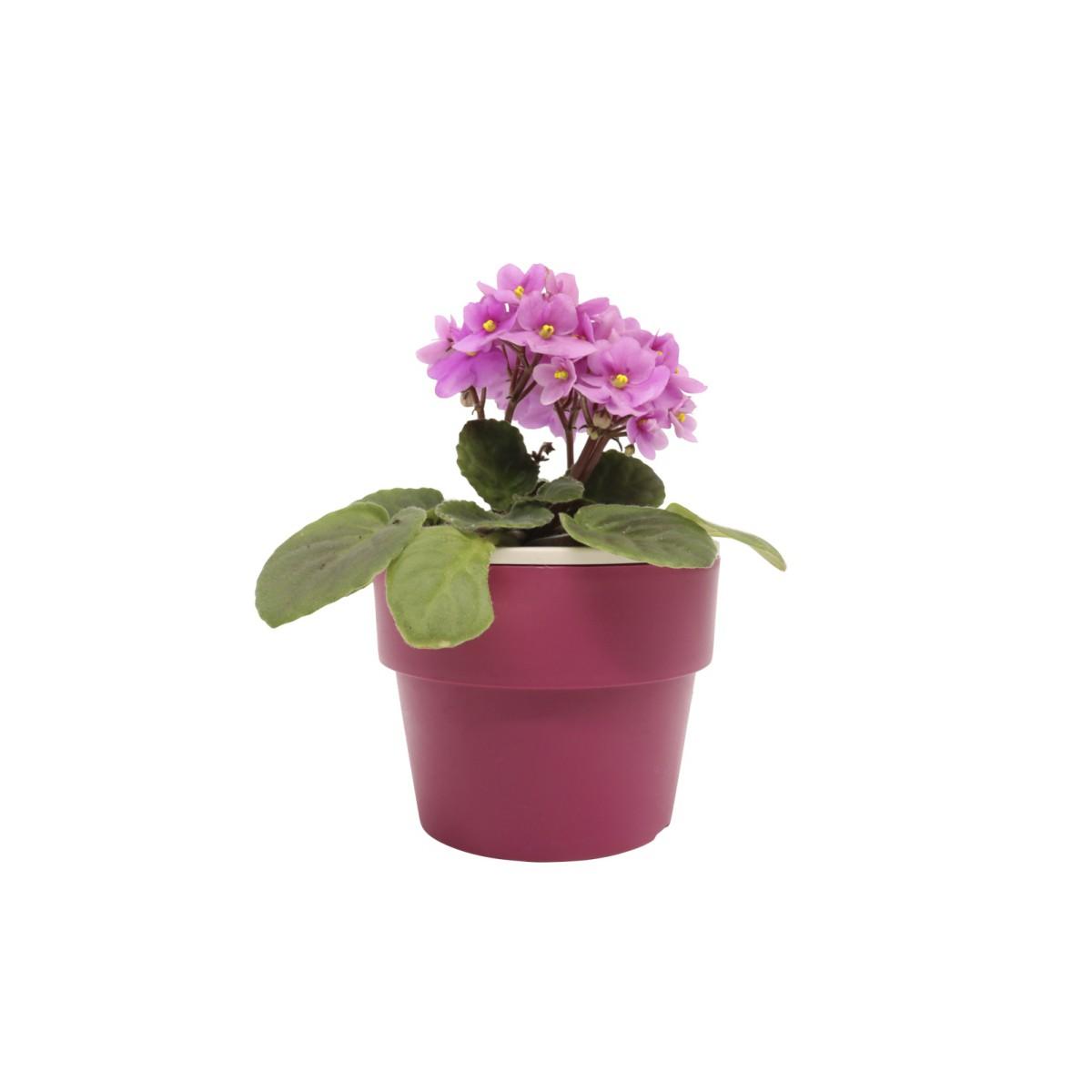 Vaso Autoirrigável Pequeno Marsala Linha Plantar < Ou >