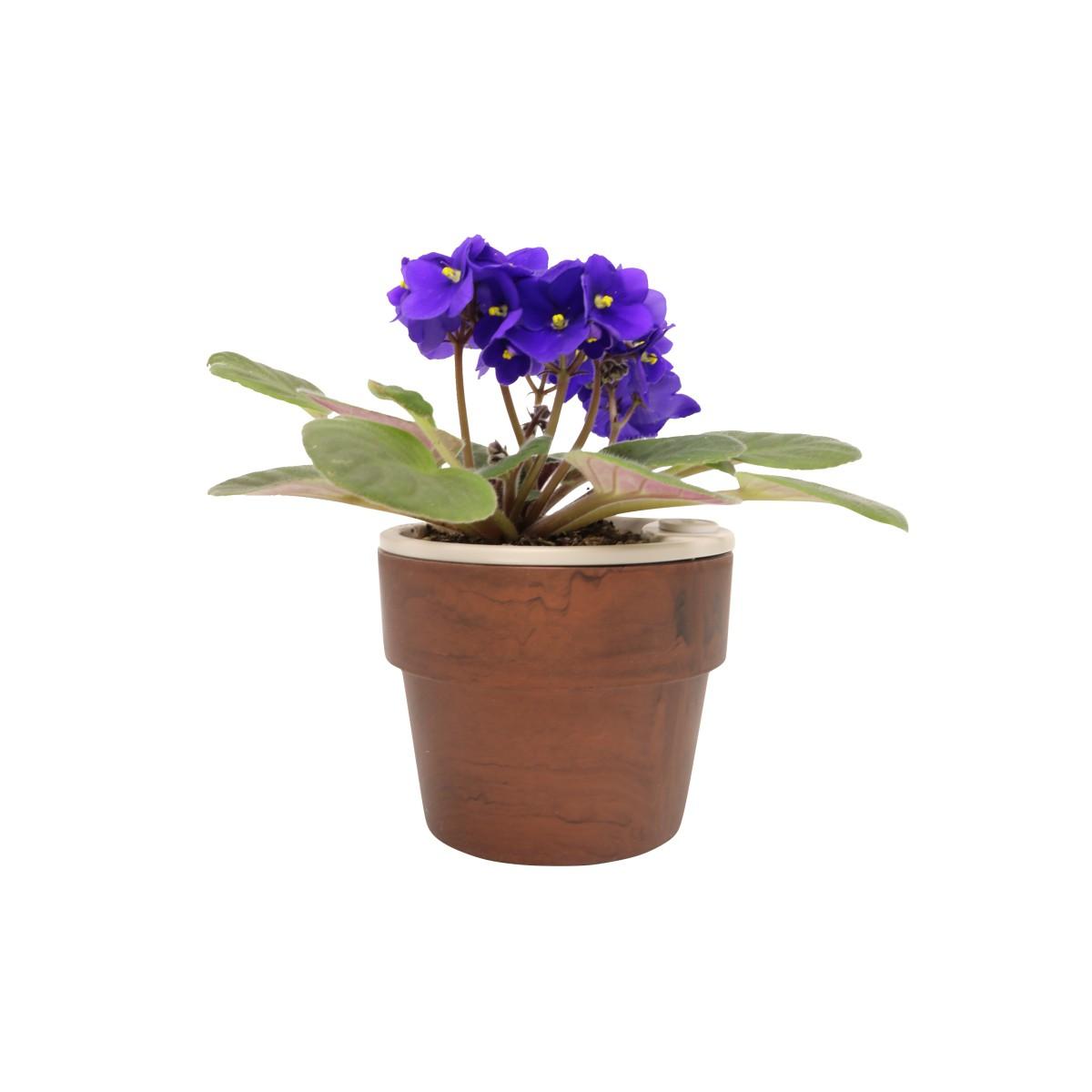 Vaso Autoirrigável Pequeno Mogno Linha Plantar < Ou >