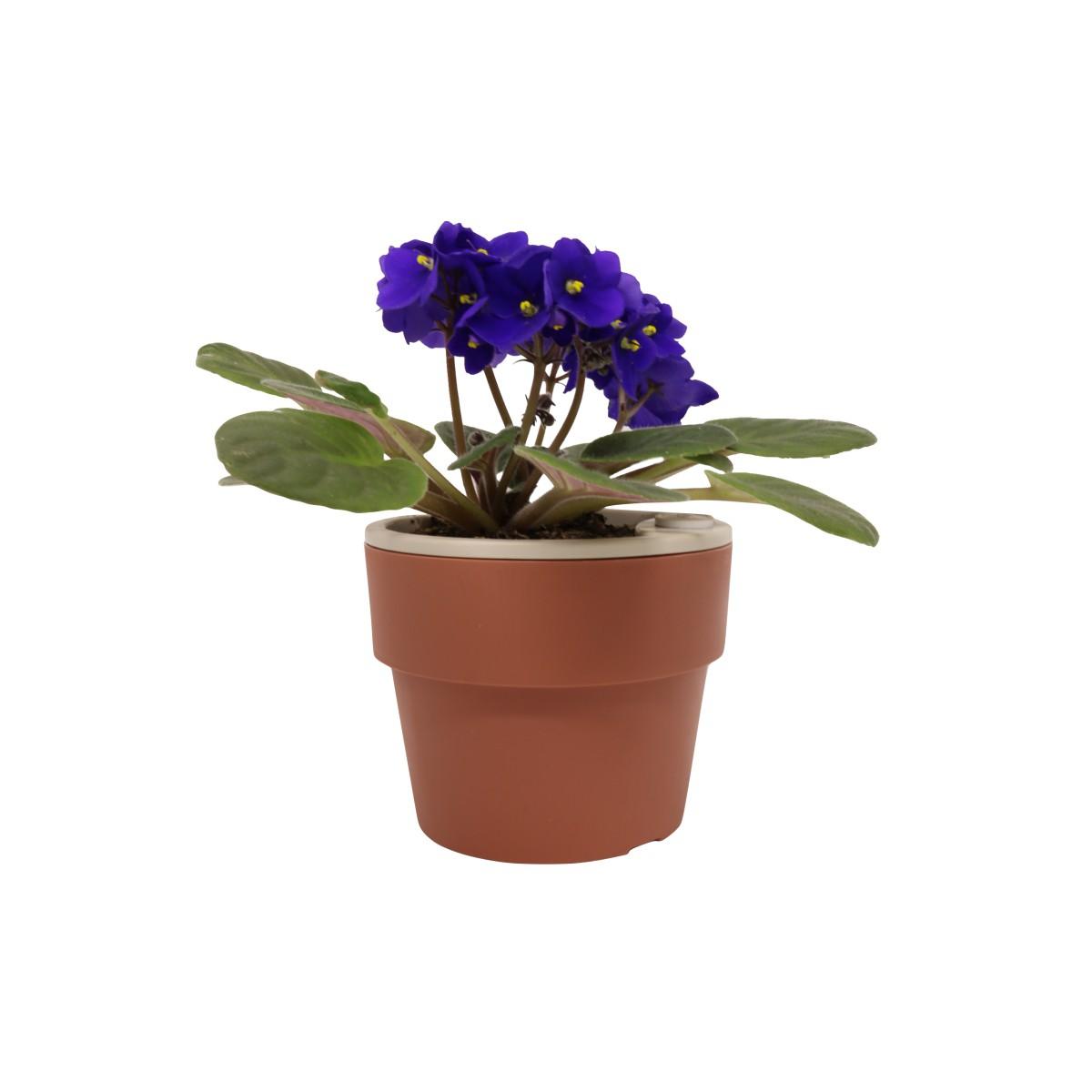 Vaso Autoirrigável Pequeno Terracota Linha Plantar < Ou >