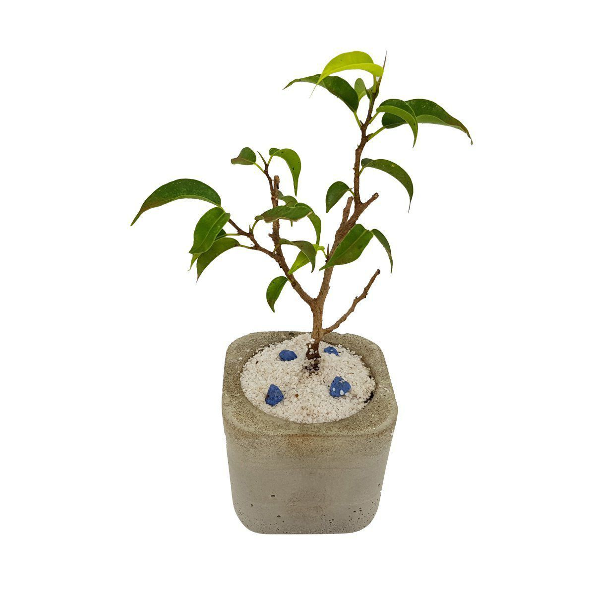 Vaso de cimento 5,3cm x 6cm MD04