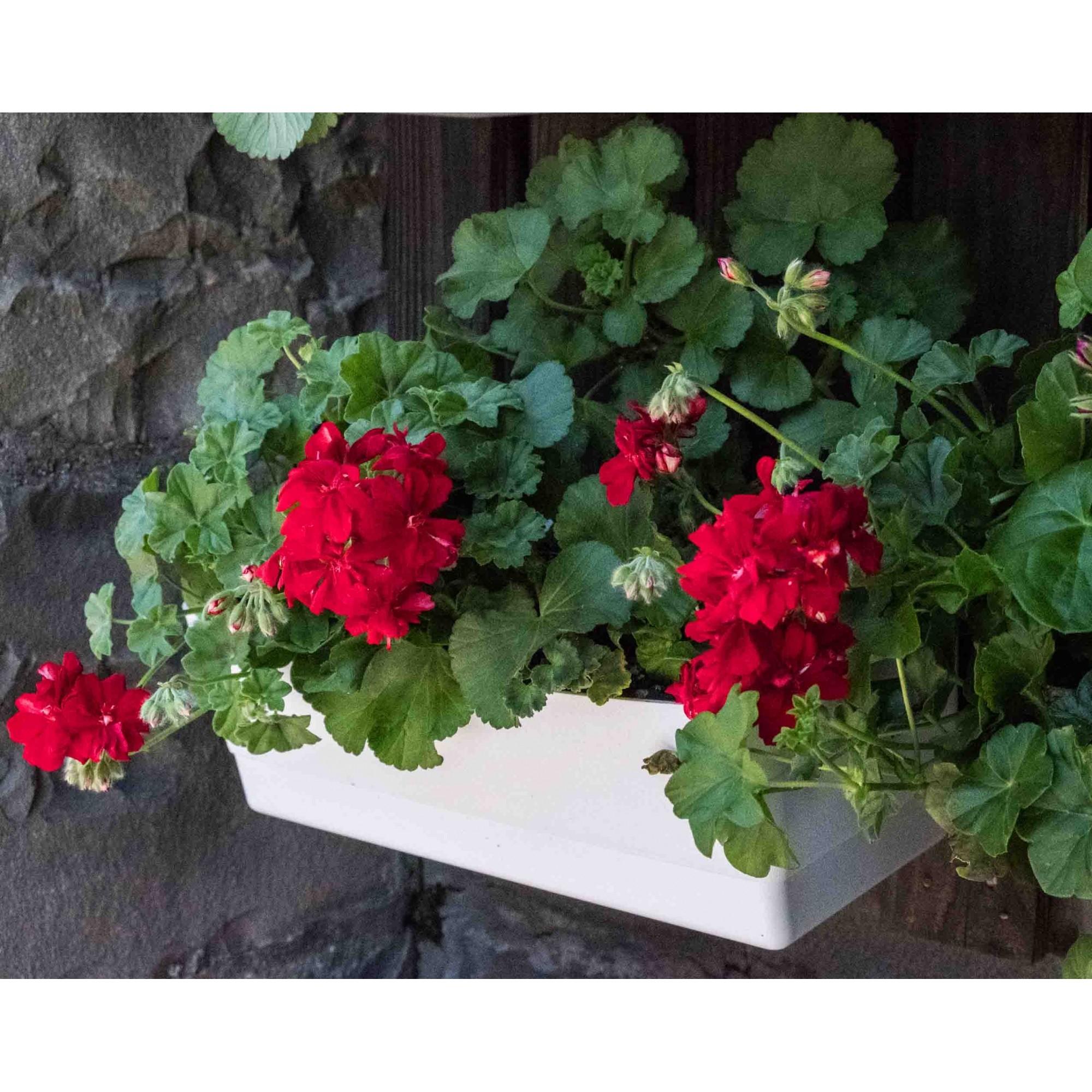 Vaso de Parede Horta Autoirrigável Acqua Planta Laranja 18cm x 44cm