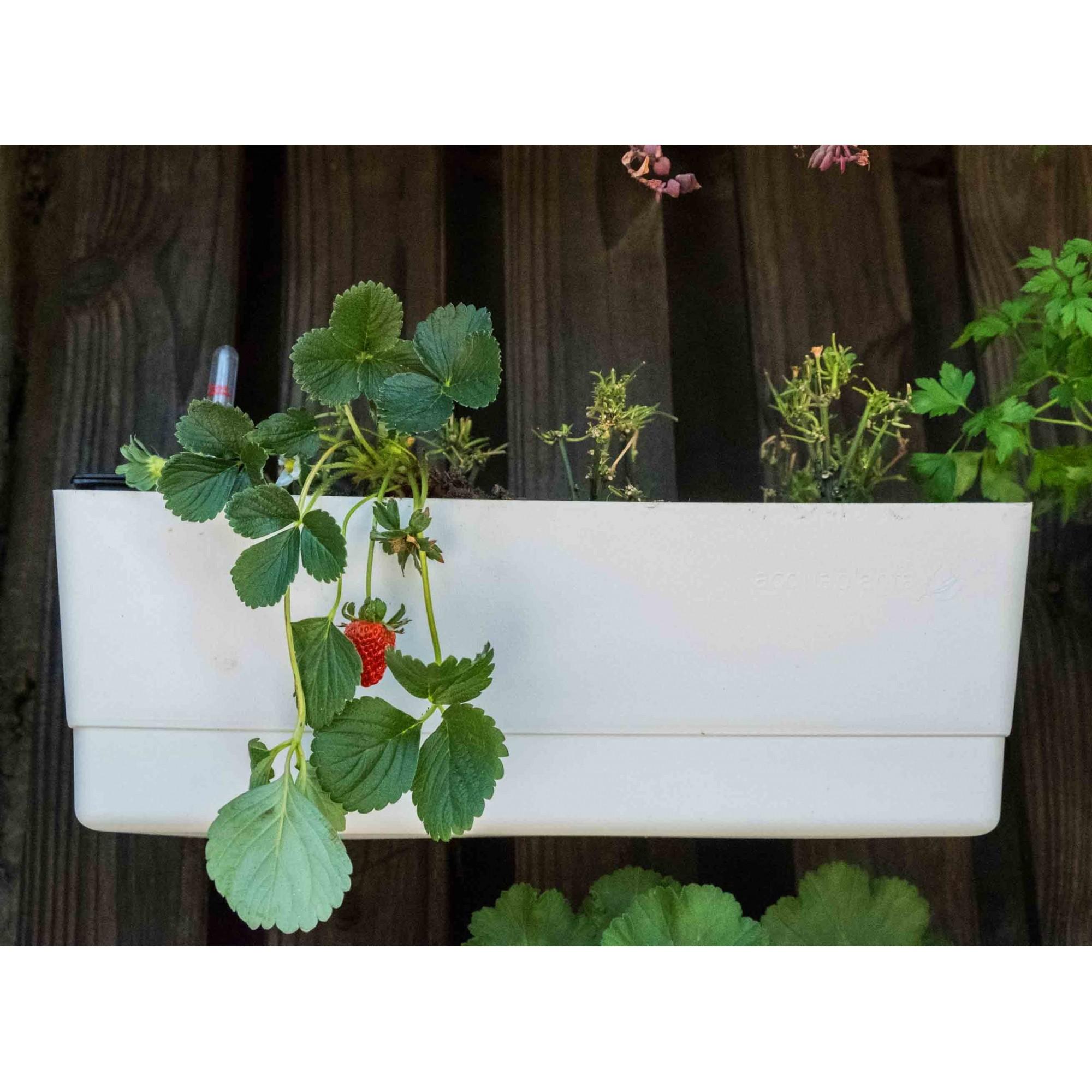Vaso de Parede Horta Autoirrigável Acqua Planta Branco 18cm x 44cm