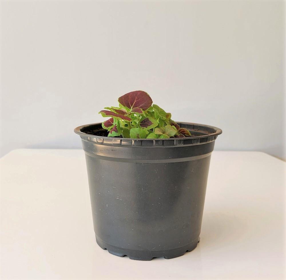 Vaso de Planta Holambra NP 15 Preto
