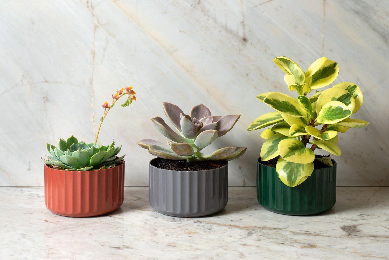 Vaso Groove Mini Verde Botanic Fechado Linha Plantar < Ou >