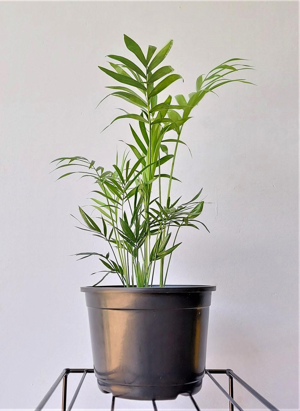 Vaso para Plantas 03 Preto 12,5cm x 17cm
