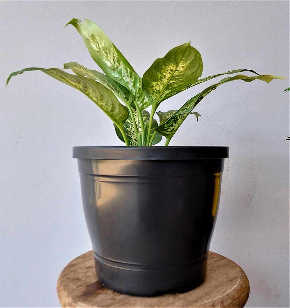 Vaso para plantas Primavera 04 Preto 19cm x 23cm