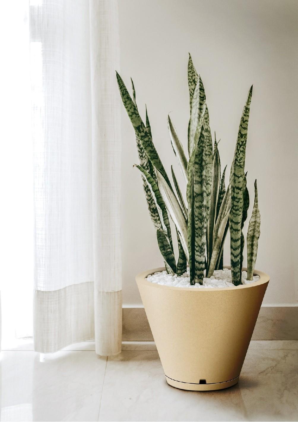 Vaso Petra Cone 31cm x 37cm Com Prato Cor Areia