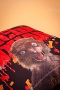 Almofada Esquadrão Suicida The Weasel