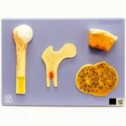 Estrutura do osso