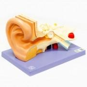 Ouvido 3x o tamanho natural em 3 partes