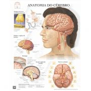 Poster Anatomia do cérebro - Loja Civiam