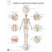 Poster Articulações do esqueleto - Loja Civiam