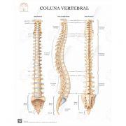 Pôster Coluna vertebral