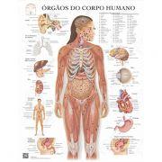 Pôster órgãos do corpo humano