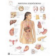 Poster Sistema endócrino - Loja Civiam