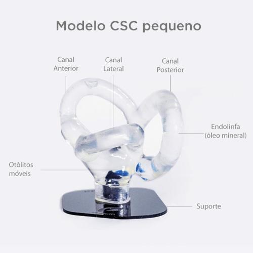 Modelo pequeno de canais semicirculares