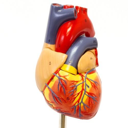Coração clássico em 2 partes