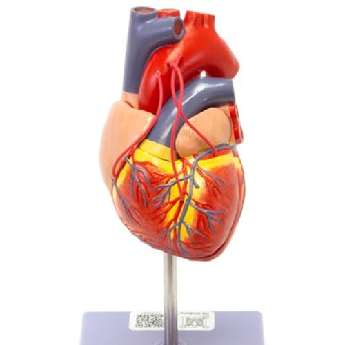 Coração com revascularização bypass