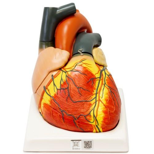Coração gigante em 4 partes