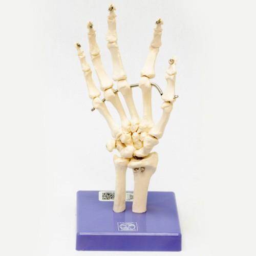 Esqueleto da mão