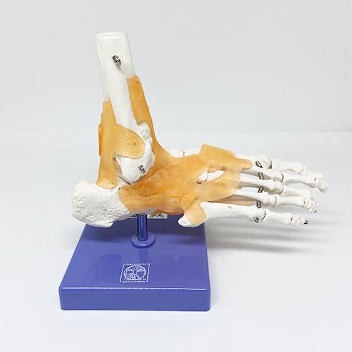 Pé e tornozelo flexíveis com ligamentos