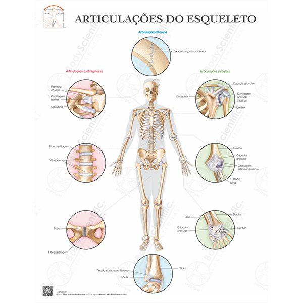 Pôster Articulações do esqueleto