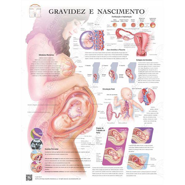 Poster gravidez e nascimento