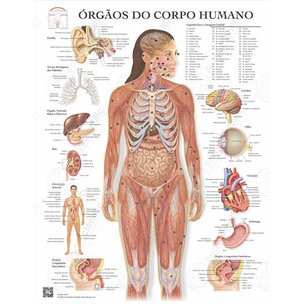 Poster Órgãos do corpo humano