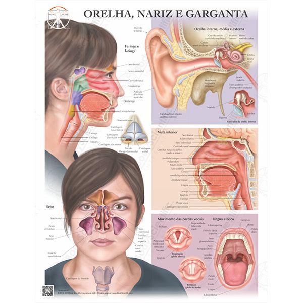 Poster Ouvido, nariz e garganta