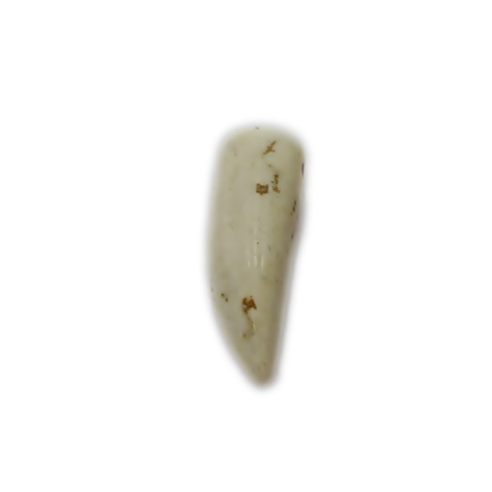 Pingente de pedra natural dente Howlita bege P (10 unid.)- PPN001