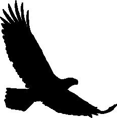 A433 Auto Adesivo Aguia